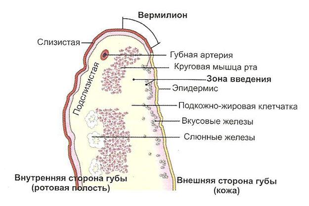 Реванесс увеличение губ