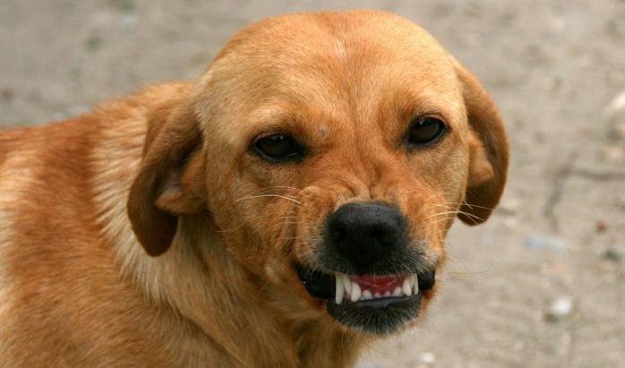 Какая сумма морального ущерба при нападении собаки