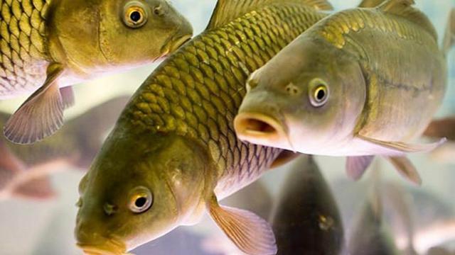 З1 квітня вУкраїні заборонений вилов риби
