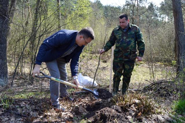 Новий рекорд України: уЛьвівській області висадили найдовшу липову алею