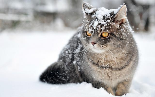 «Помаранчевий» рівень небезпеки: Францію накрив потужний снігопад (ФОТО, ВІДЕО)