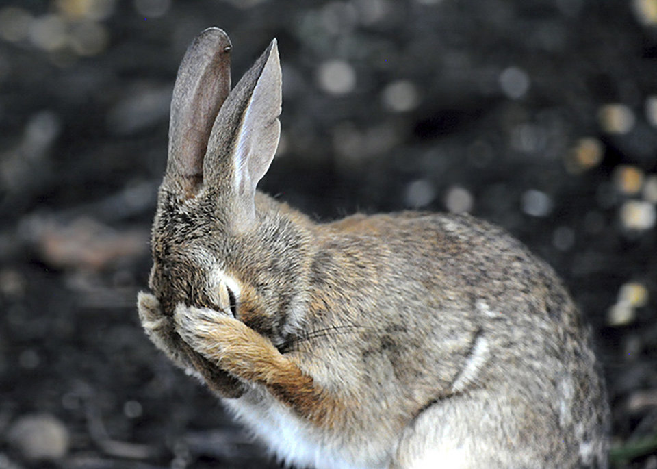 Зайцы фото смешные