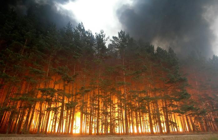 """Результат пошуку зображень за запитом """"пожежа ліс"""""""