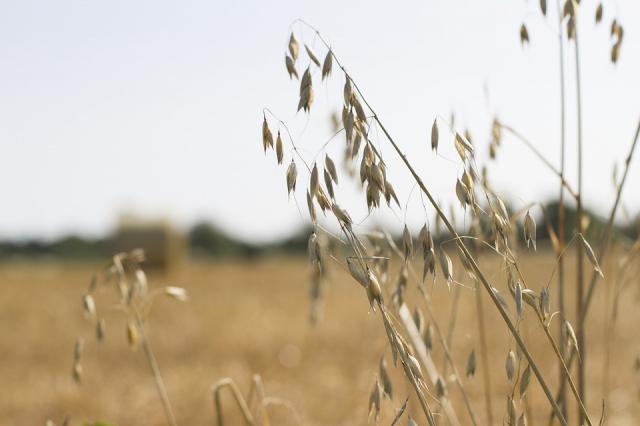 Компания изСаудовской Аравии завладела крупнейшим агрохолдингом Украинского государства
