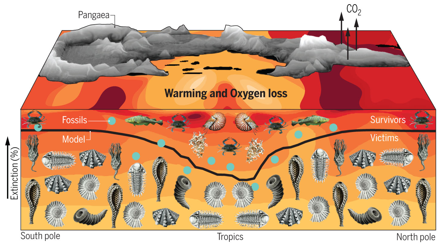 Эта иллюстрация показывает процент морских животных, которые вымерли в конце пермского периода. Черная линия иллюстрирует процент исчезнувших видов в зависимости от широты. Более высокий процент морских животных выжил в тропиках, меньший – на полюсах. Изображения ниже линии демонстрируют некоторые из вымерших видов. Цвет воды показывает изменение температуры: красный – наиболее сильное потепление. Над водой расположен суперконтинент Пангея, вулканы которого выделяют углекислый газ. Фото: Вашингтонский университет