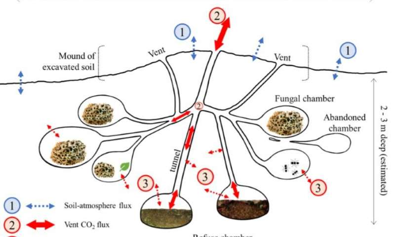 Схема вентиляции в муравейнике Аttа cephalotes, фото: Journal of Geophysical Research: Biogeosciences
