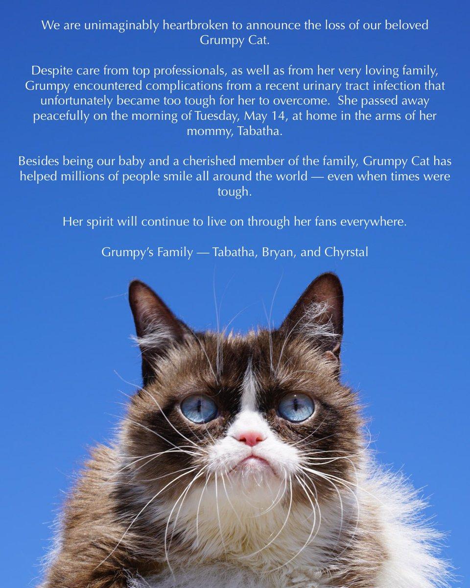 Grumpy Cat померла від важкої хвороби. Фото: Twitter