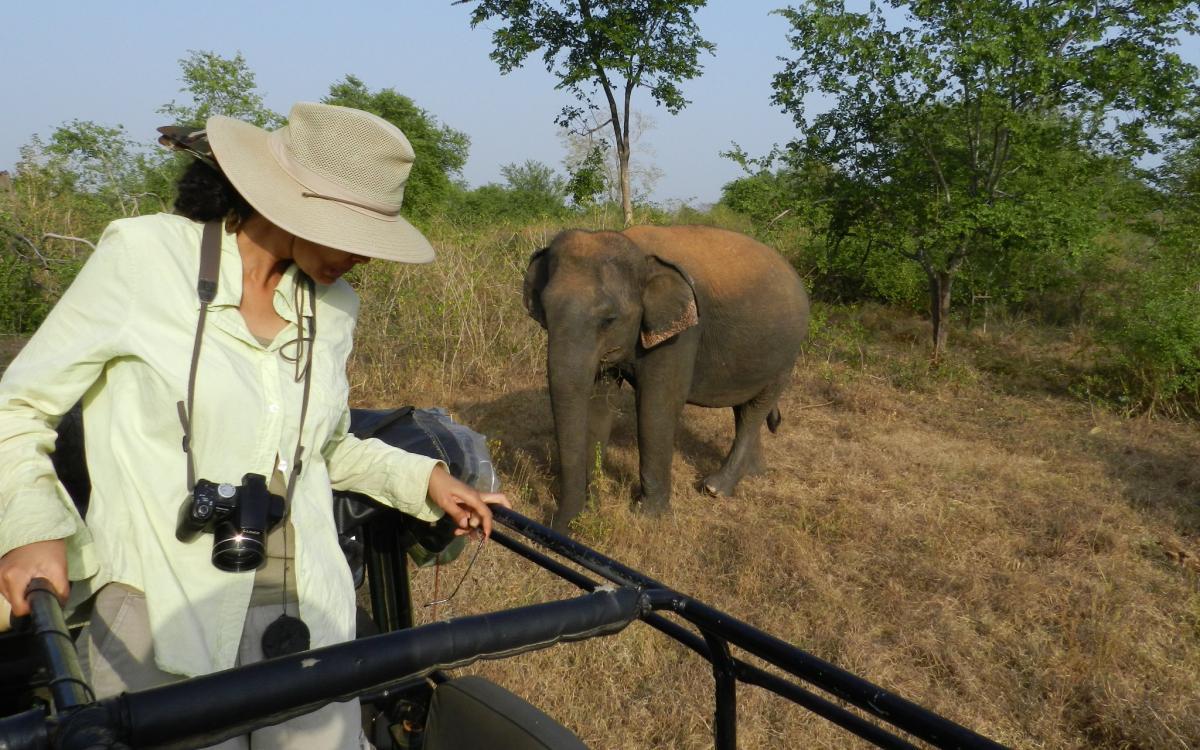 Шермин де Сильва занимается защитой азиатских слонов, фото: Shermin de Silva