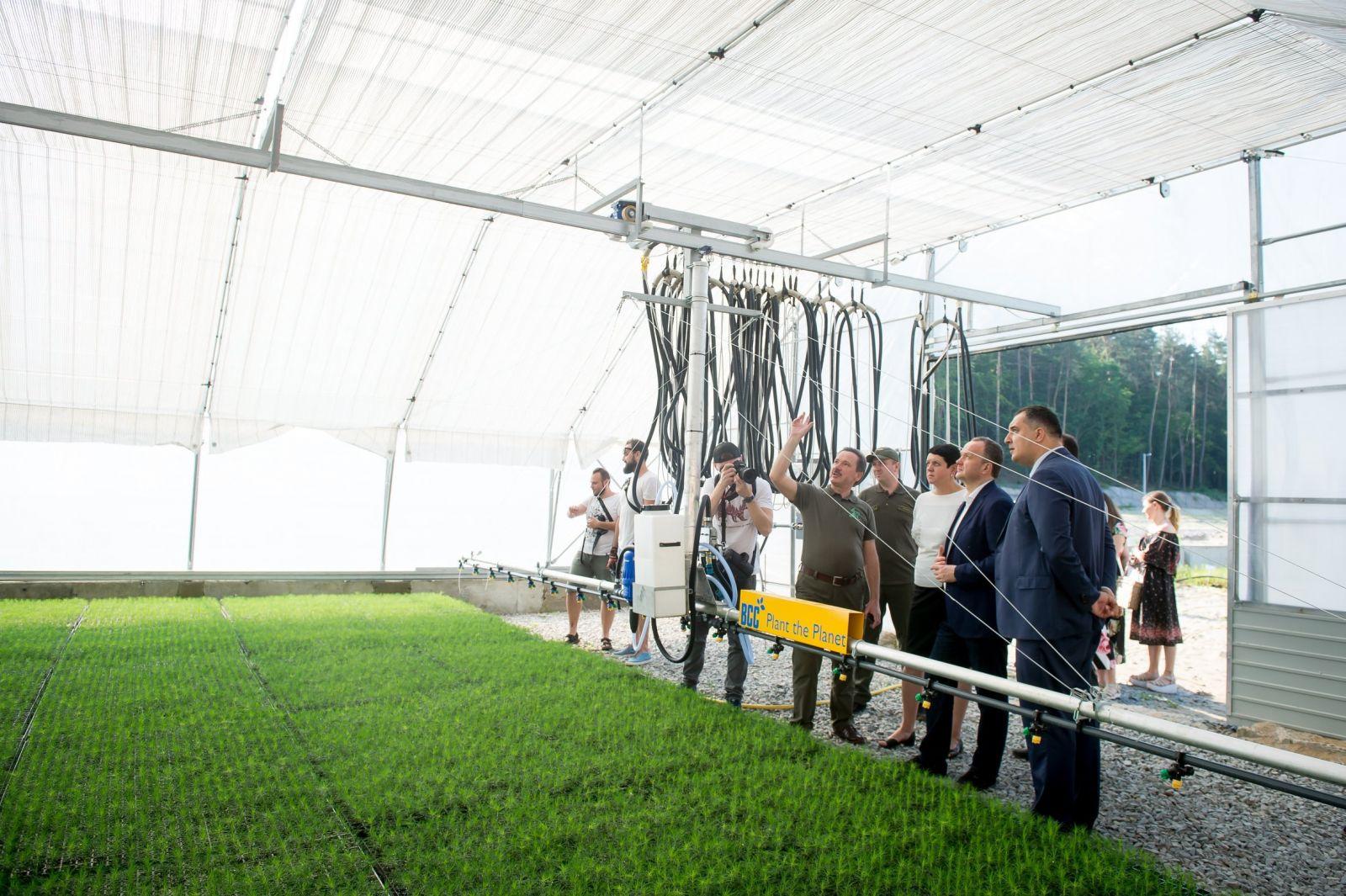 Минприроды показало, как собирается возрождать леса Карпат. Фото: пресс-служба ведомства