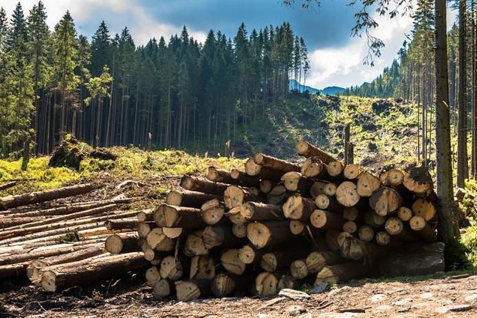 """Результат пошуку зображень за запитом """"вирубка лісів"""""""