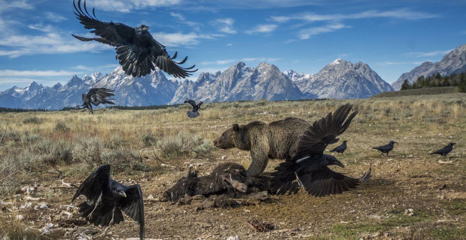 National Geographic оприлюднив кращі фото десятиліття