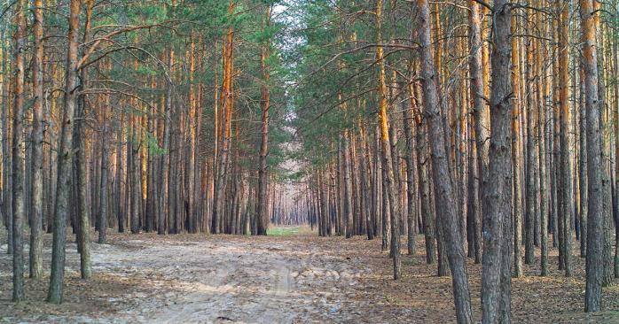 ВРУ ухвалила закон про інвентаризацію лісів. Фото: flickr.com