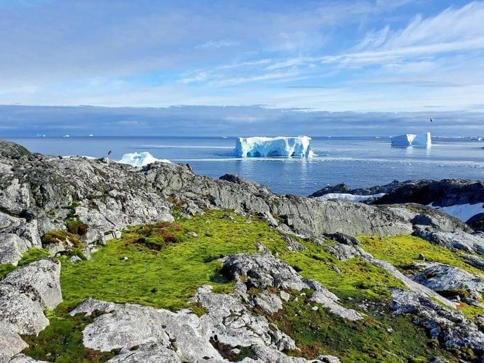 Антарктида влітку. Фото: Facebook