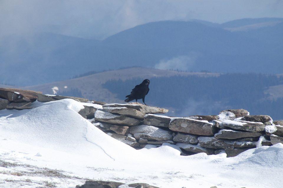 Карпати замело снігом / Фото: Vasyl Fitsak у Фейсбук