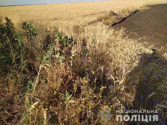 «Вогняні жнива» влаштували діти на полі пшениці на Харківщині. Фото: Нацполіція