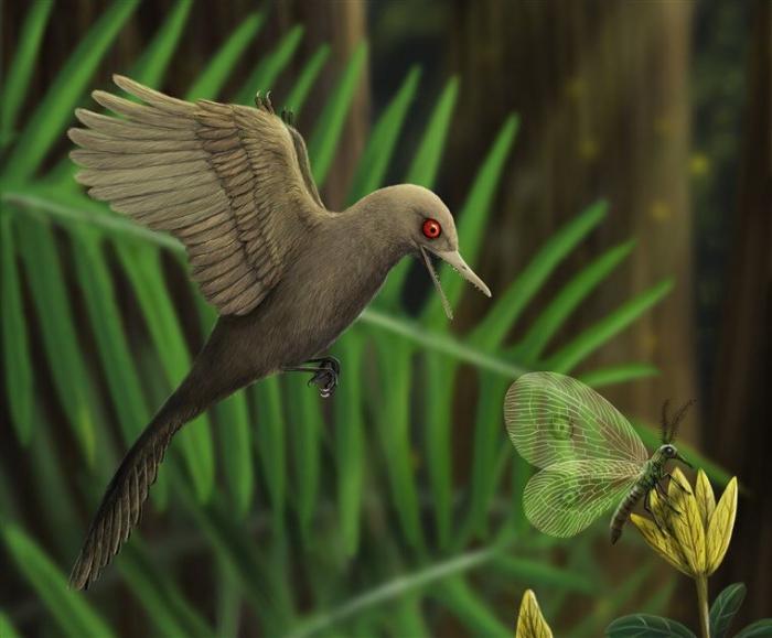 Так мог выглядеть Oculudentavis khaungraae, иллюстрация: HAN Zhixin / Los Angeles Natural History Museum