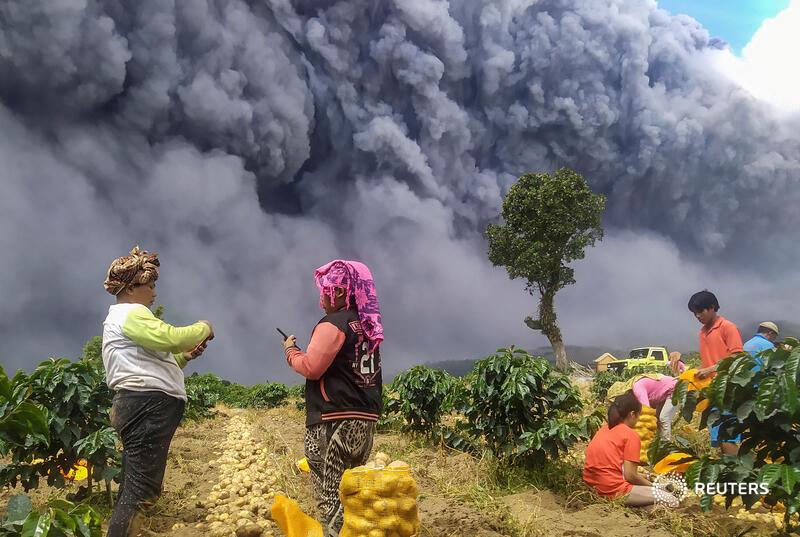 Виверження вулкану не завадило індонезійцям зібрати урожай картоплі / Фото: Antara Foto/Sastrawan Gintin REUTERS