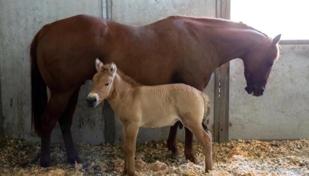 Клонированный конь Курт. Фото: пресс-служба компании