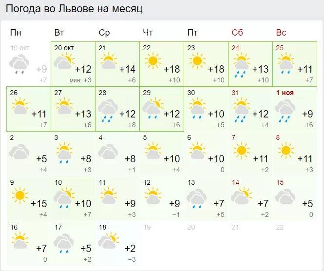 Погода во Львове. Скриншот: Gismeteo