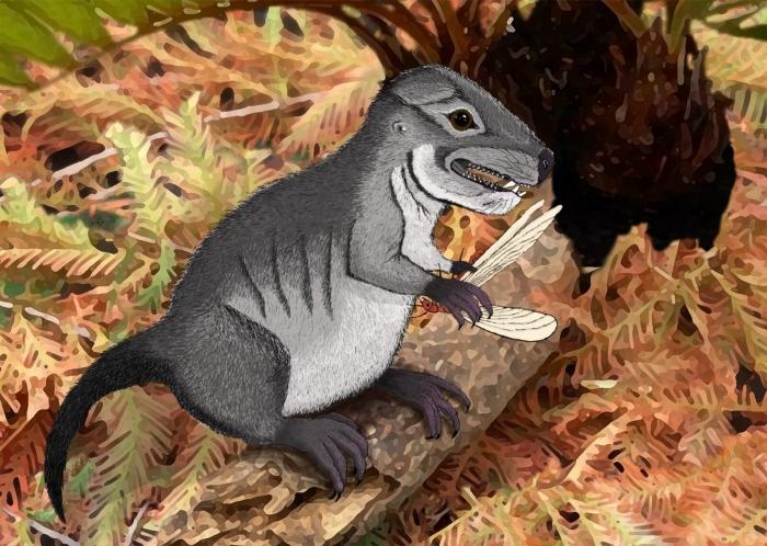 Так міг виглядати Kataigidodon venetus, ілюстрація: Ben Kligman