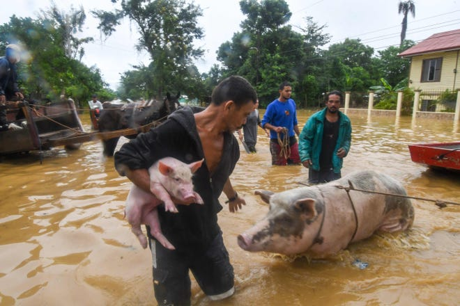 Евакуація тварин та людей. Фото: BBC
