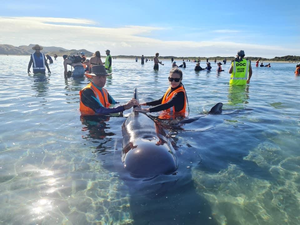 Спасение дельфинов. Фото: Facebook