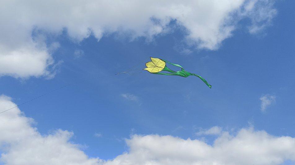 Гігантські тюльпани замайоріли у небі на Миколаївщині (ФОТО)