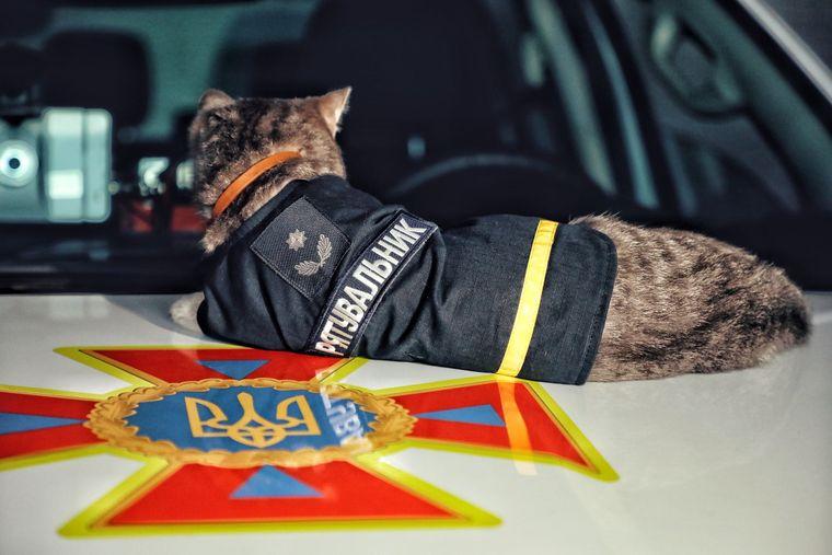 Кот-спасатель. Фото: ГСЧС