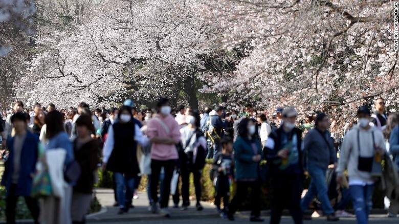 Цвітіння сакури. Фото: CNN