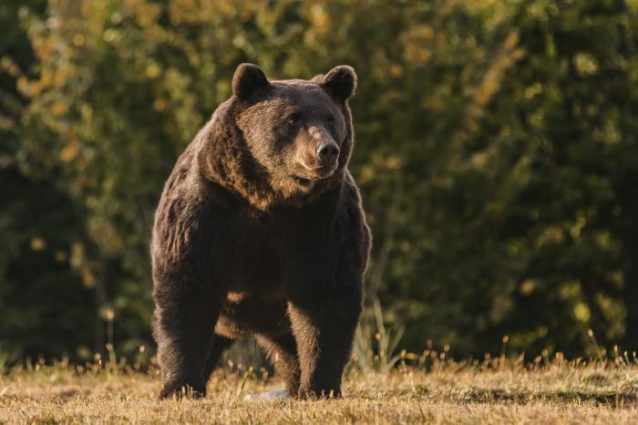 Медведь Артур, фото: Agent Green