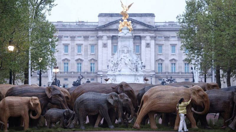 Деревянные слоны. Фото: BBC