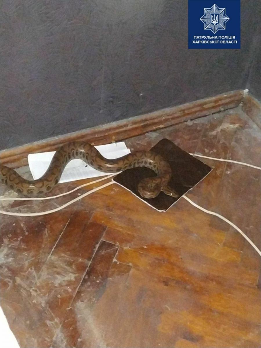 Питона под кроватью нашла жительница Харьковщины. Фото: Facebook